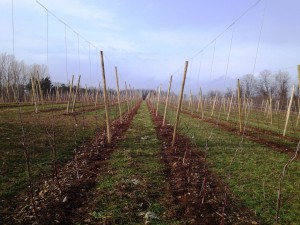Cover photo for New Method for Planting, Growing and Maintaining an Apple Orchard