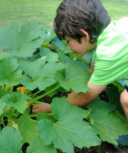 Cover photo for 4-H Mini-Gardening