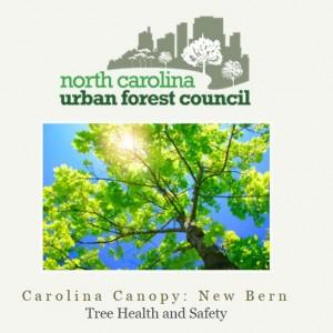 Carolina-Canopy-New-Bern-2015