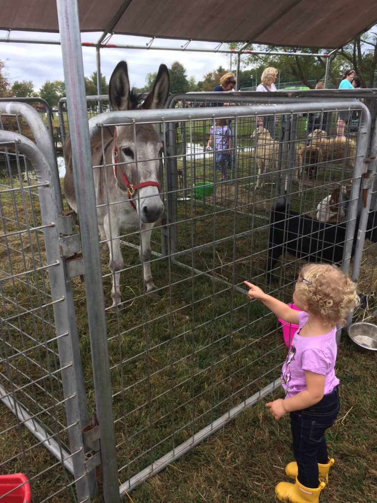 child looking at donkey