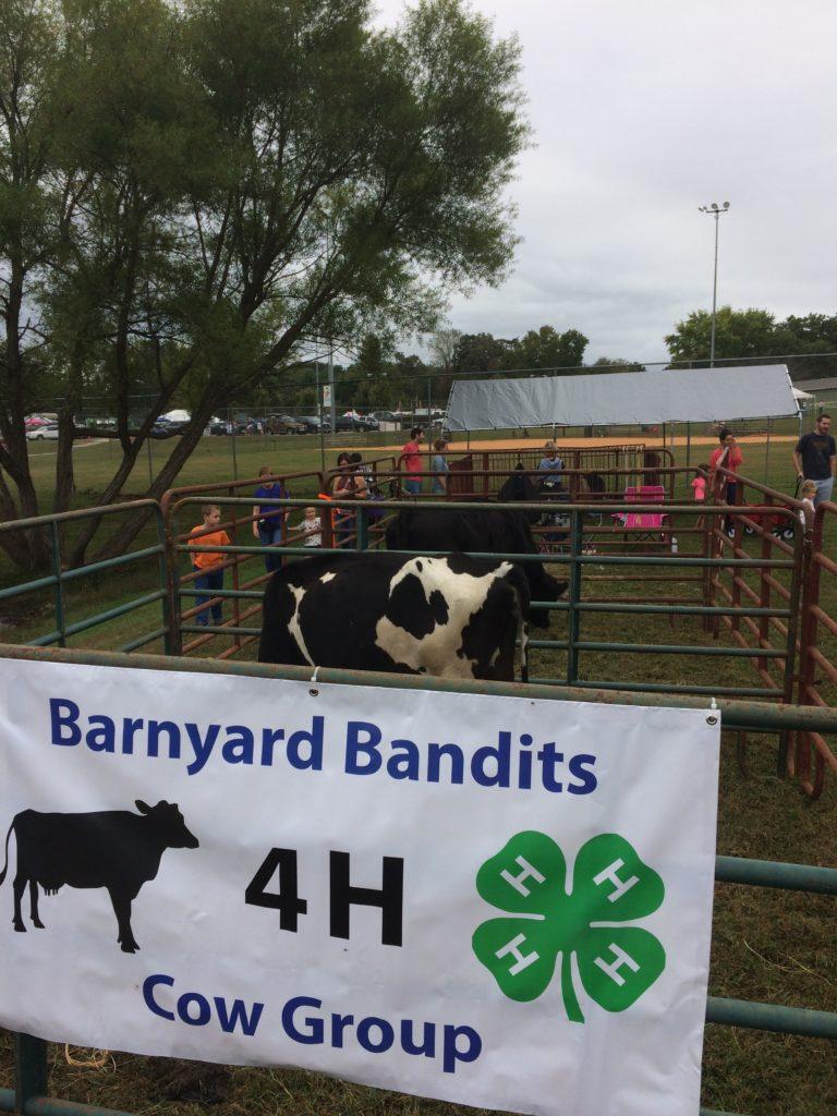 Barnyard Bandits cow group