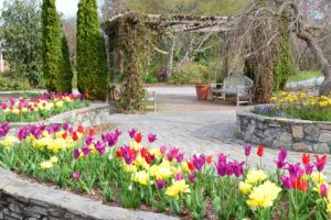 Cover photo for Spring Classes at Bullington Gardens