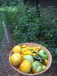 Cover photo for Vegetable Gardening in WNC