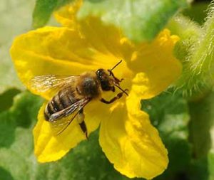 Cover photo for Pollinators Are Essential to Our Existence