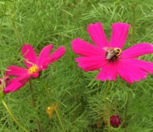Cover photo for Gardening for Pollinators in WNC
