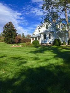 Beautiful fescue lawn in WNC.