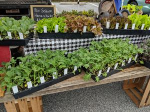 Vegetable Transplants For Sale