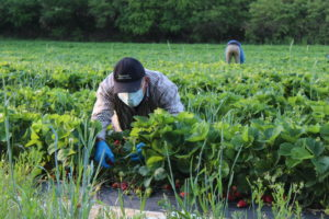 Farm Worker with Gloves and Mask