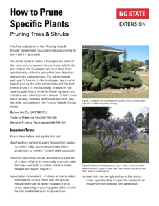 Pruning Specific Plants