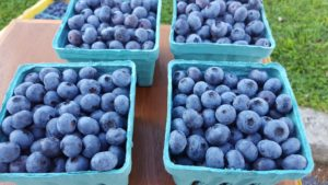 Cover photo for It's Blueberry Time in Henderson County!