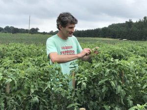 Steven Schoof looks for insects on tomato plants.