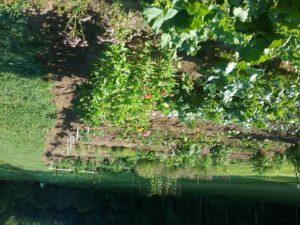 Connemara Vegetable Garden