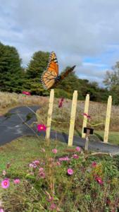 Pollinator Garden at Flat Rock Park