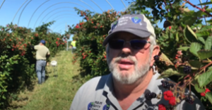 Cover photo for Mike Pack Tells How Extension Helps His Blackberry Farm