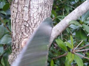 Cutting a branch