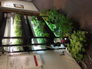veggie seedlings