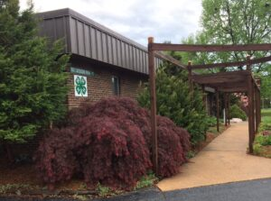 japanese maple extension office