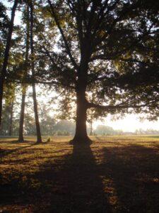 southern red oak sunrise