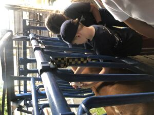 Kids petting livestock