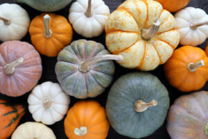 Cover photo for Pumpkins Are a Very Versatile Native Species